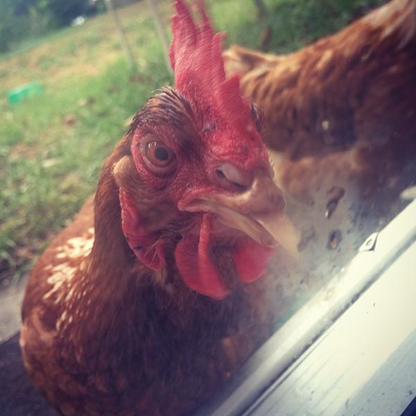 Chicken licker.